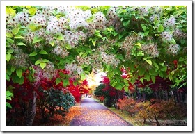平岡樹芸センターの紅葉