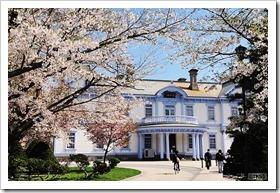 豊平館前の桜
