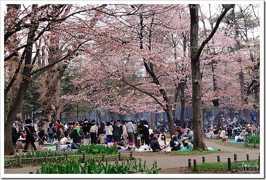 花見@円山公園