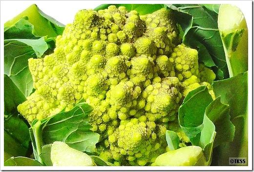 ロマネスコ(Broccolo Romanesco)