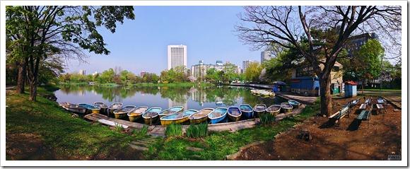 中島公園の菖蒲池