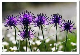 百合が原公園の花