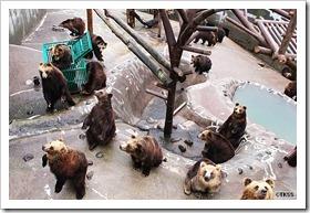 のぼりべつクマ牧場