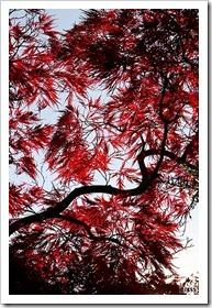 平岡樹芸センターの紅葉 2011