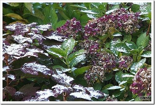 札幌初雪2009