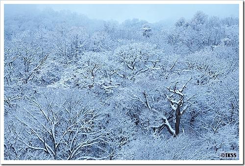 裏山(藻岩山)の雪景色
