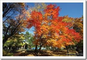 北大キャンパスの紅葉
