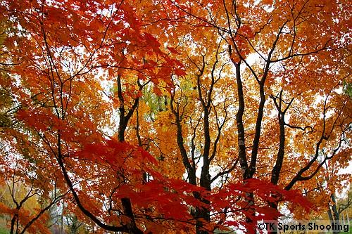 真駒内公園 紅葉