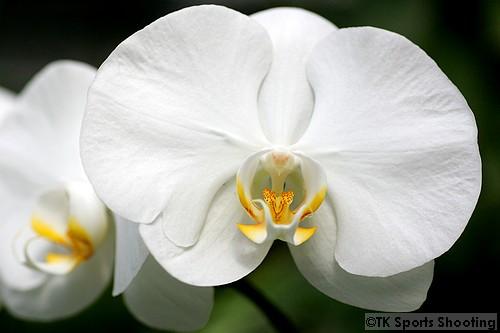トロピカルドーム 胡蝶蘭