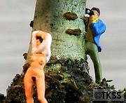 木陰の誘惑