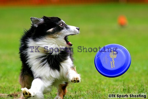 Club-DDS ACANA CUP Disc Dog Game CHAMPIONSHIP2006 3rd Stage