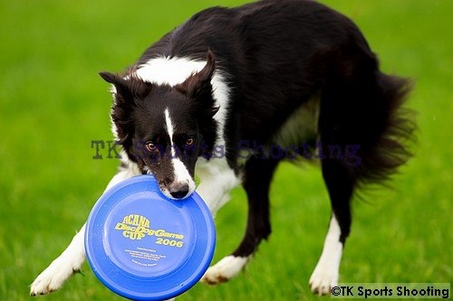 Club-DDS ACANA CUP Disc Dog Game CHAMPIONSHIP2006 5th Stage