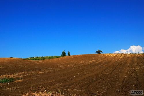 栗山の農場