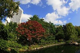 中島公園の日本庭園