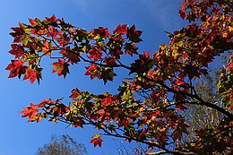 雨竜沼湿原の紅葉