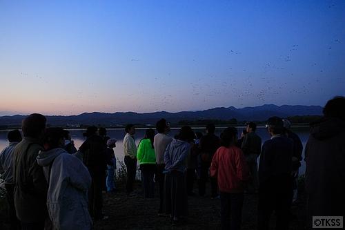 宮島沼のマガン見物人