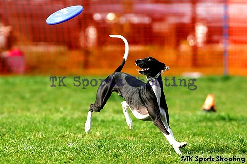 Club-DDS ACANA CUP DiscDogGame CHAMPIONSHIPS2006 Final Stage