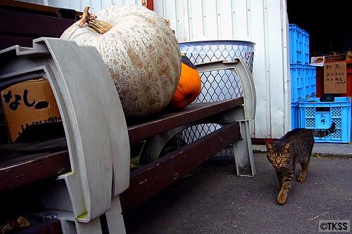 むらかみ牧場の猫