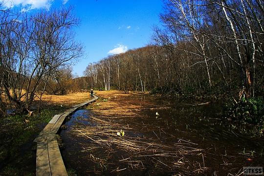 西岡公園 木道