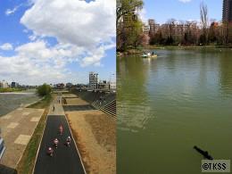 豊平川河川敷、菖蒲池
