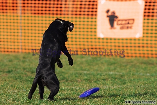 Club-DDS ACANA CUP DISCDOG GAME CHAMPIONSHIP2007 Final Stage