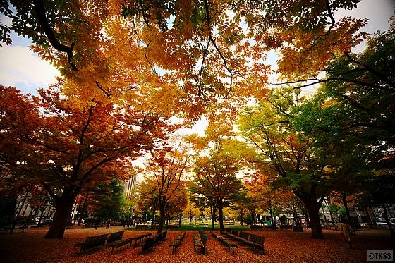 晩秋の大通公園