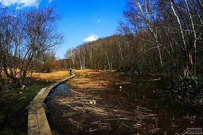 西岡水源地公園 木道