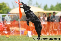Club-DDS ACANA CUP DISCDOG GAME CHAMPIONSHIP2008 Stage2