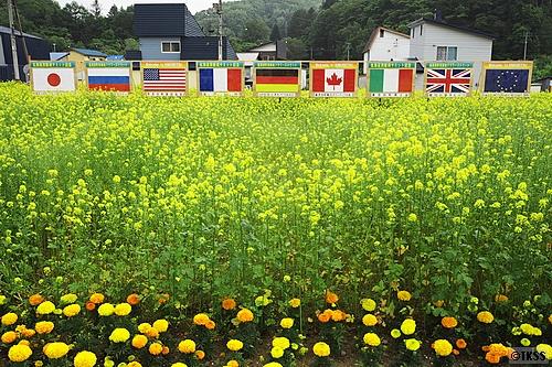 喜茂別の花畑