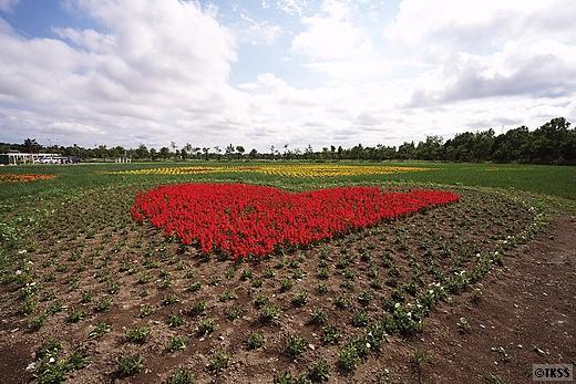 花の地上絵