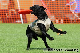 Club-DDS ACANA CUP DISCDOG GAME CHAMPIONSHIP2008 Stage3