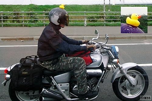 あひるのプッカ on ヘルメット