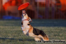 Club-DDS ACANA CUP DISCDOG GAME CHAMPIONSHIP2008 Stage4
