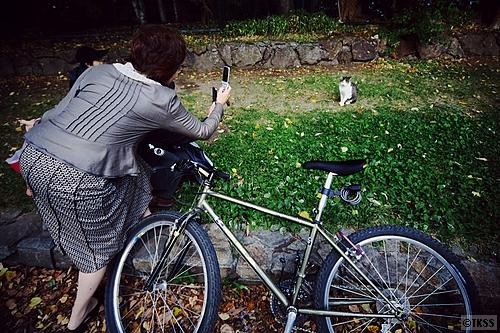 中島公園の猫