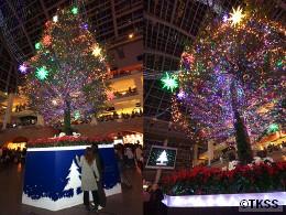 サッポロファクトリーのジャンボクリスマスツリー