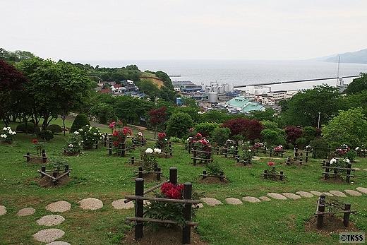 手宮緑化植物園の牡丹園