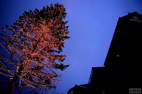 ウィングベイ小樽のクリスマスツリー