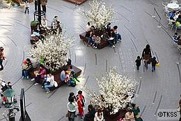 Sakura Garden at サッポロファクトリー